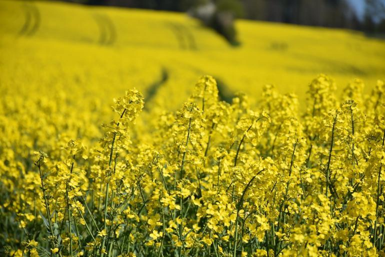 """Eine englische Studie zeigt, dass die Exposition von mit Neonikotinoiden gebeiztem Saatgut zu einem langfristigen Rückgang der Wildbienen in England führt. https://bienen-nachrichten.de/2017/wildbienen-leiden-unter-neonicotinoiden/196  """"Der ..."""